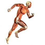 La energía en el deporte