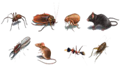 What you can expect from New York Pest Control Company