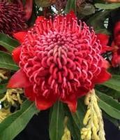 Cool Aussie flower