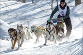 Types of Sled Dogs