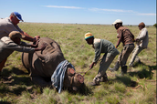 http://imgarcade.com/1/hunting-rhinos/