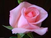 Ваша, Завгородняя Вера, Консультант по красоте Мэри Кэй