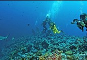 VIDEO OF MARINE BIOLOGIST IN ACTION
