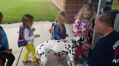 firefighter dalmatian dog