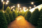 Christmas Trees??🎄