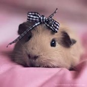 girl piggy