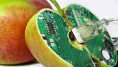 GMOs Picture
