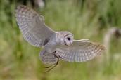 How big is their wingspan-¿Qué tan grande es su envergadura