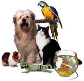 Our pet store is the best around!