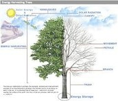 Solar botanic Trees