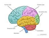 Brain by design