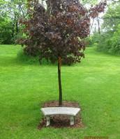 Brett's Tree