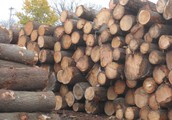 See the Difference in Prime Wood Products