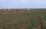 This is the Coastal Plains with the crops growing and people raising cattle.