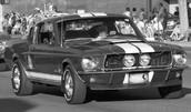 1964 Mustangs beginning.
