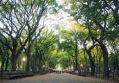 Scene 2: A Walk In The Park