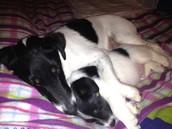 Dit is mijn hond en de puppy