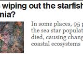 Starfish Wasting