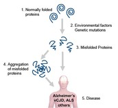 PROTEINS AFFECTED BY ALS