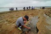 Rock Platform Ecosystem