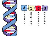 What are the molecules that makeup DNA