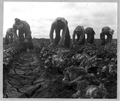 Farming Immigrants
