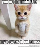 Little kitty!