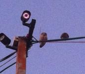 ספירת הציפורים הגדולה בעיצומה...