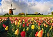Koja je država u europi najpoznatija po tulipanima?