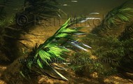 eichhornia (anchored water hyacinth)