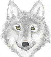 Proclaimed a Wolf's Head