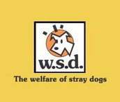 WELFARE OF STRAY DOGS