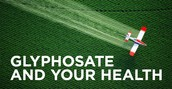 Glyphosate Is The Chemical in Round up