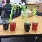 Celery Experiment!
