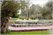 Parque el Olivar.