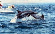 Care for ocean animals