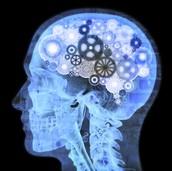 Neuroscience major
