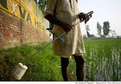 The Green Revolution in India