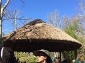Canopy #1