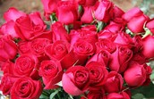 Where you'll get cheap flowers free delivery for Convenient and Affordable