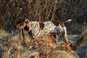 Best hunting dog!