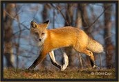 Update on track & FOX
