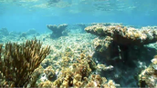 Example of coral reef