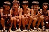 Interested about the people of the Amazon?
