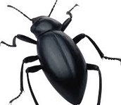 Bug-My-Brother