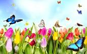 Coming up, Spring Fling!