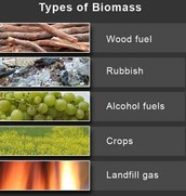 Example of thypes of Biomass
