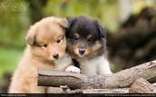 puppy service