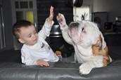 WHY DOGS LIKE KIDS