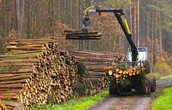 Product: Logs
